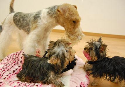 遊びた盛りの仔犬たち (*^_^*)_e0236430_2228622.jpg