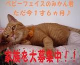 はっぴーらいふ_b0271465_18424959.jpg