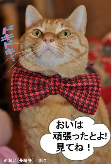 明日は☆_b0271465_22134666.jpg