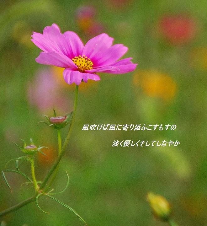 c0187781_1853457.jpg
