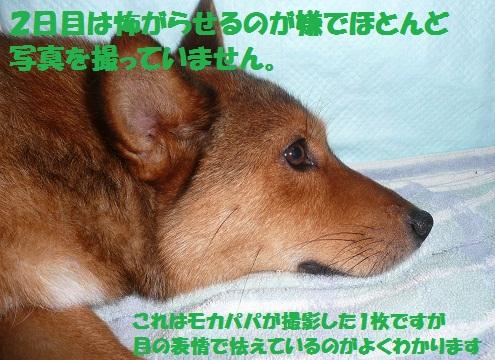 f0121712_1410466.jpg