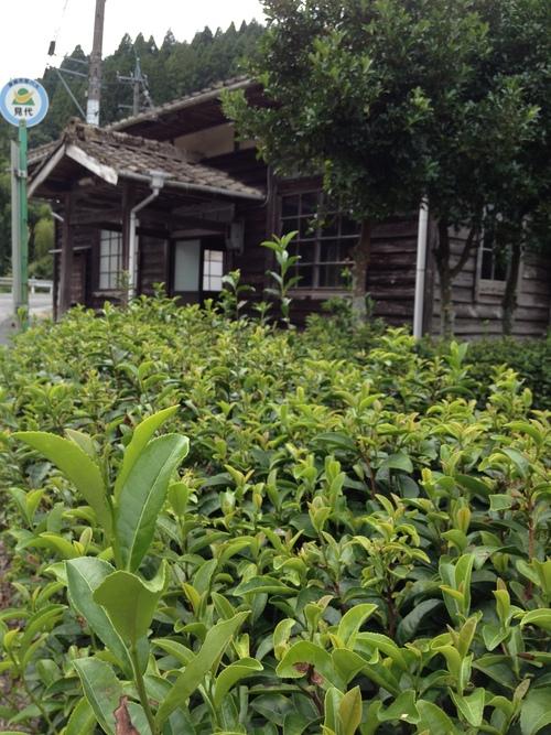 紅茶旅 (新城~作手~新城 1)_b0220318_527764.jpg