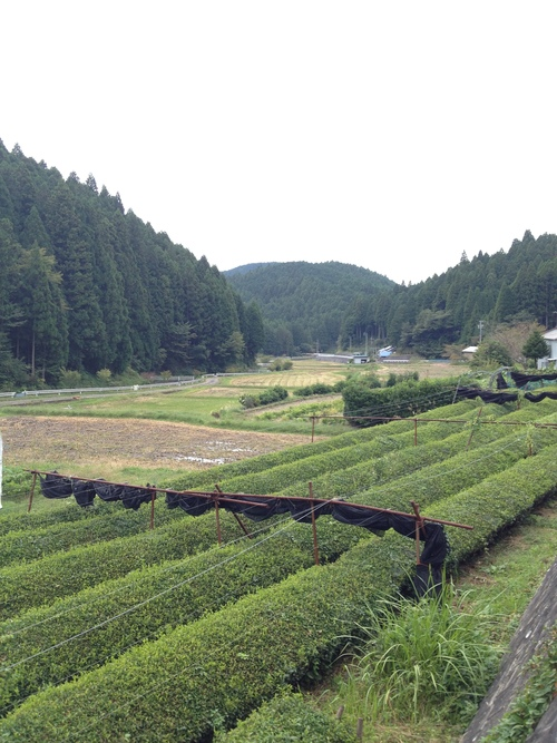 紅茶旅 (新城~作手~新城 1)_b0220318_528183.jpg