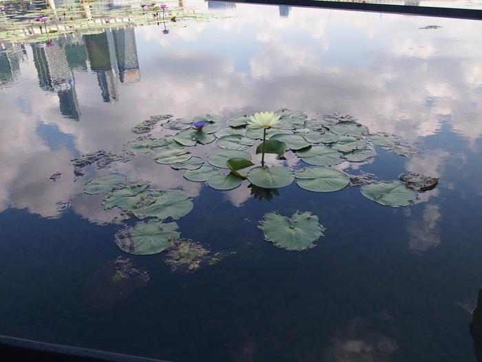 2012 6月 シンガポール 22  Marina Bay Sands の中を散歩_f0062122_9364538.jpg