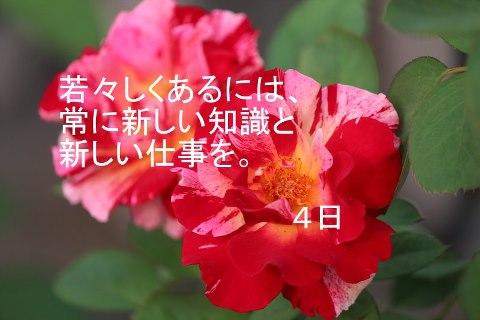 f0180726_1335227.jpg