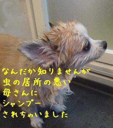 b0138430_15551644.jpg