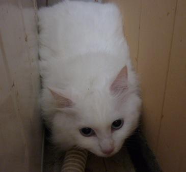 白猫にゃんず☆_b0271465_041411.jpg