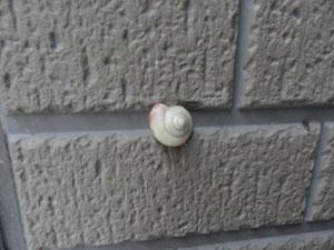 壁に~_e0251265_15363431.jpg