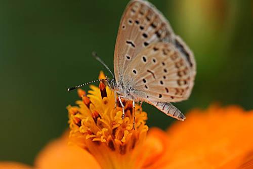 ルリマツリ、コリウスの丘。蝶たち_f0030085_2155152.jpg