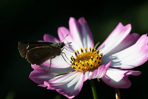 ルリマツリ、コリウスの丘。蝶たち_f0030085_21553659.jpg