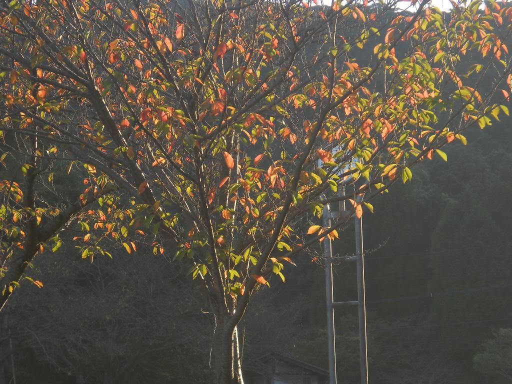 木の葉もストリングスを~♪_f0146802_1421994.jpg
