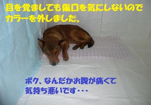 f0121712_15395927.jpg