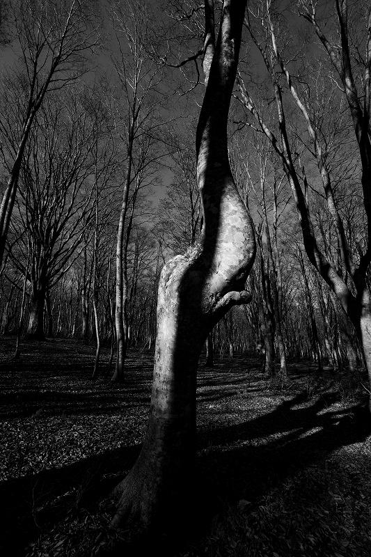 オンリーワンの作品作り 秋から冬の風景写真ワークショップ_f0050534_15394961.jpg