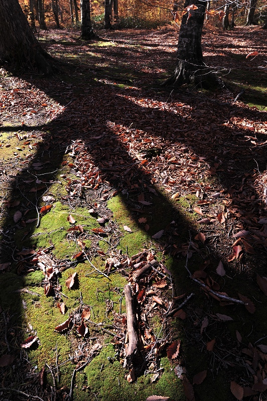 オンリーワンの作品作り 秋から冬の風景写真ワークショップ_f0050534_15401080.jpg