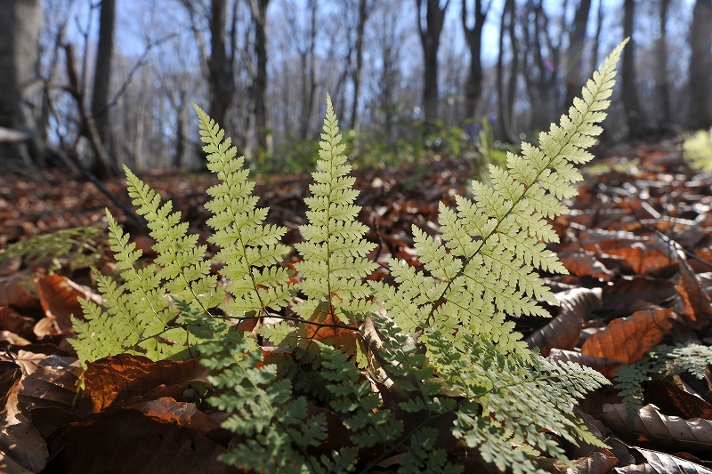 オンリーワンの作品作り 秋から冬の風景写真ワークショップ_f0050534_15413472.jpg
