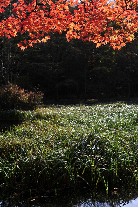 オンリーワンの作品作り 秋から冬の風景写真ワークショップ_f0050534_15421210.jpg