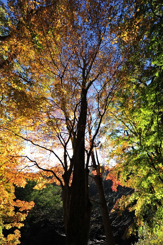 オンリーワンの作品作り 秋から冬の風景写真ワークショップ_f0050534_15455854.jpg