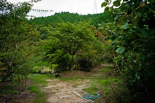 121005 常緑樹と落葉樹_b0129659_8152495.jpg