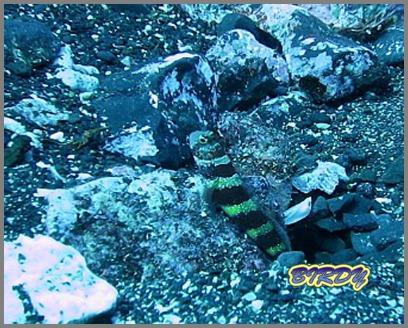 めがね岩ブイ設置_e0273365_16491010.jpg