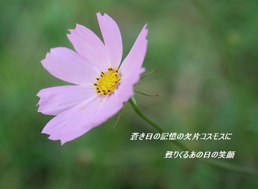 c0187781_163870.jpg