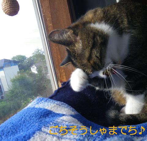 猫だらけ展のお知らせと、この頃のニャンコ♪(追記あり^^)_a0136293_1530035.jpg