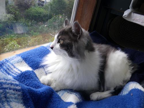 猫だらけ展のお知らせと、この頃のニャンコ♪(追記あり^^)_a0136293_153104.jpg