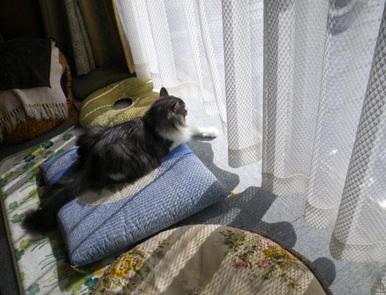 猫だらけ展のお知らせと、この頃のニャンコ♪(追記あり^^)_a0136293_15335070.jpg