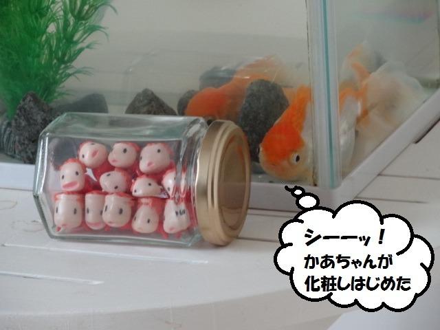 金魚のつぶやき_d0165645_91513.jpg