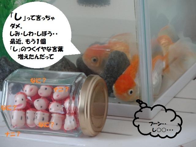 金魚のつぶやき_d0165645_921966.jpg