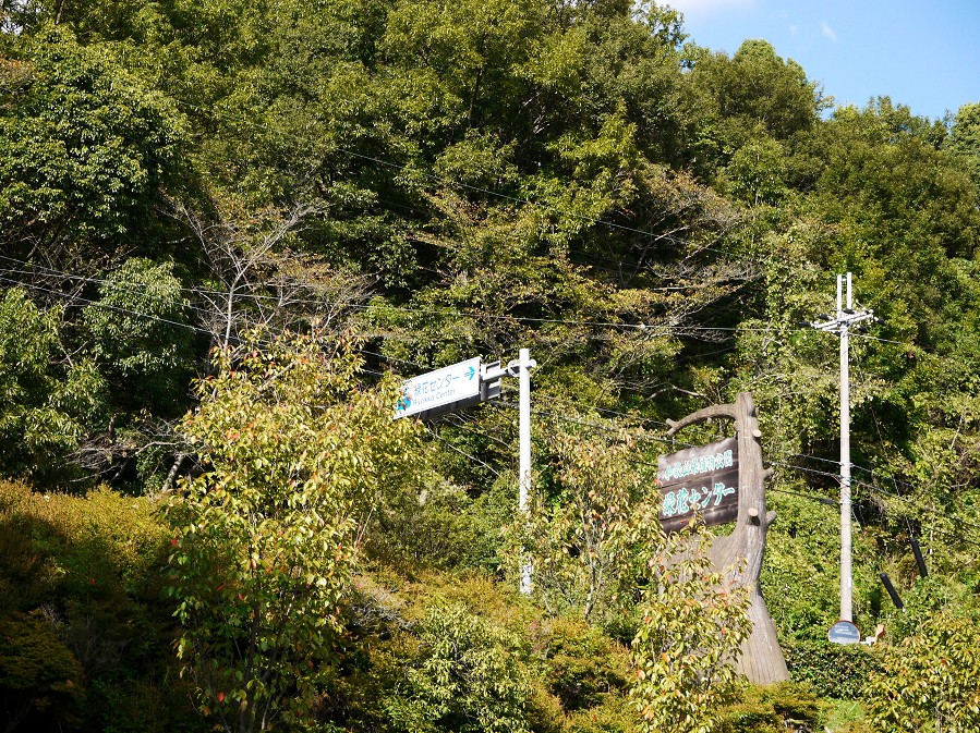 和歌山県植物公園緑花センター _b0093754_22322044.jpg