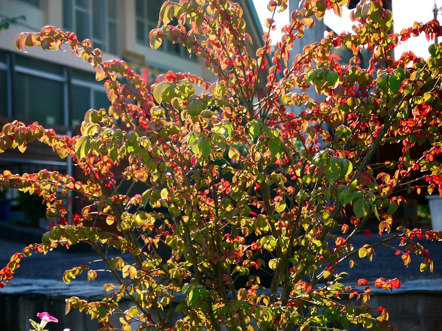 和歌山県植物公園緑花センター _b0093754_22324538.jpg