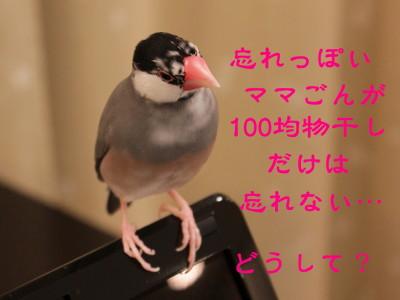 b0158061_21504549.jpg