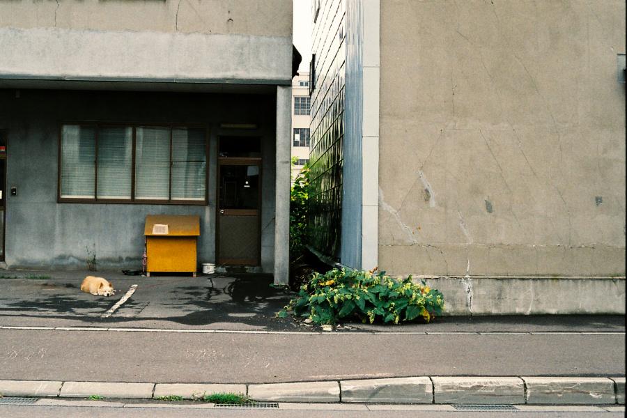 第49回 一本勝負in小樽(緊急特別開催)_e0051186_22164041.jpg