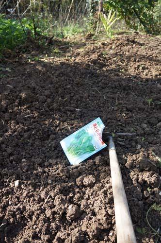 畑でノンビリ~10月の畑_f0106597_3142375.jpg
