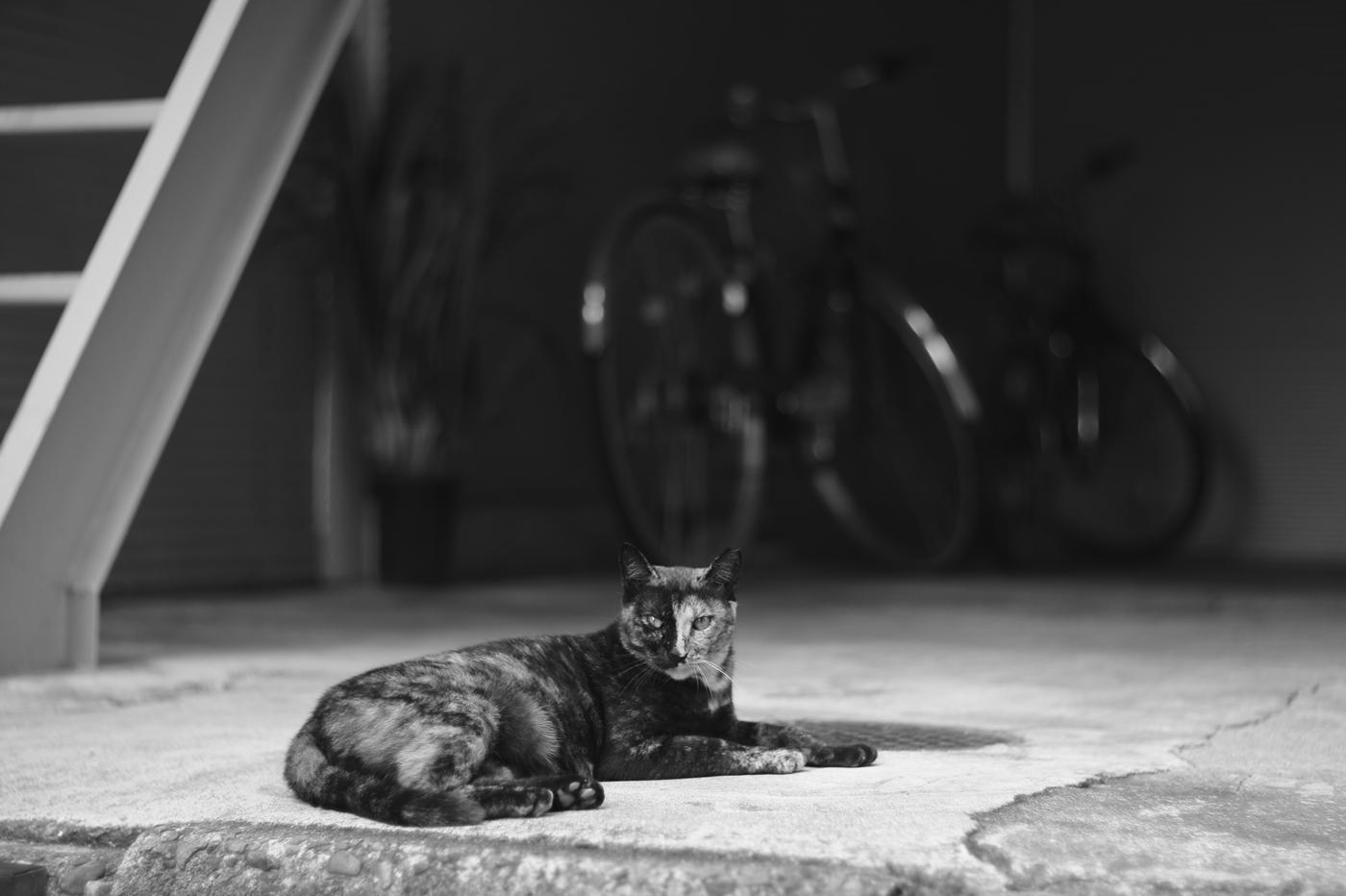 渋谷の猫、その9。_c0120903_2391494.jpg