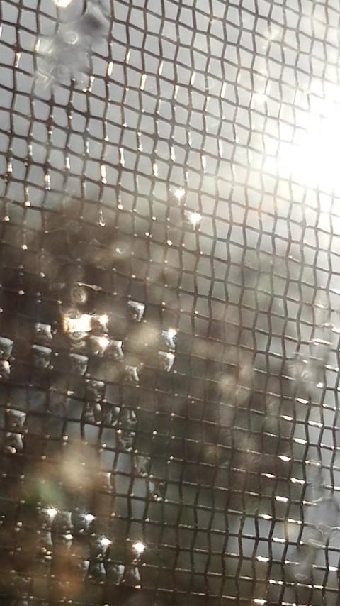 「お天気雨」のイメージ_f0155808_9324522.jpg
