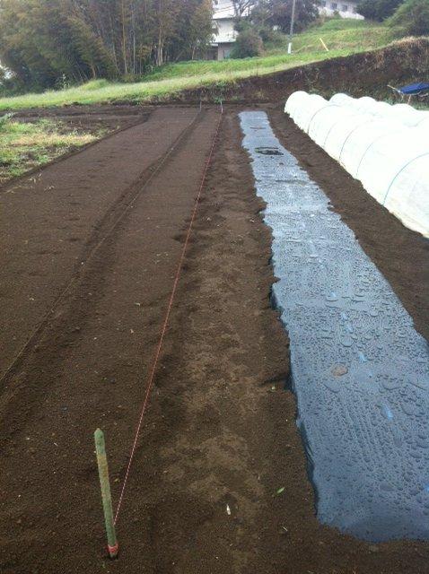 午前中は雨・・残念ながら土をいじる事は諦めます_c0222448_15105426.jpg