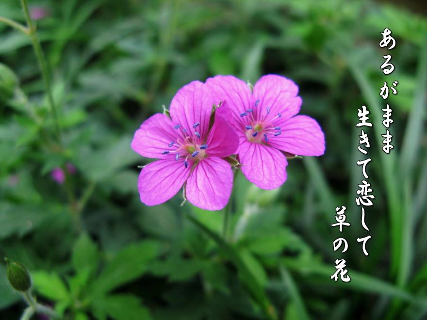 f0137096_23201382.jpg
