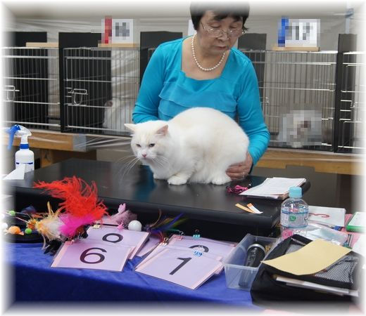 TICA&FOUR LEAF CLOVER CAT CLUB 1st CAT SHOW_c0080132_1555333.jpg