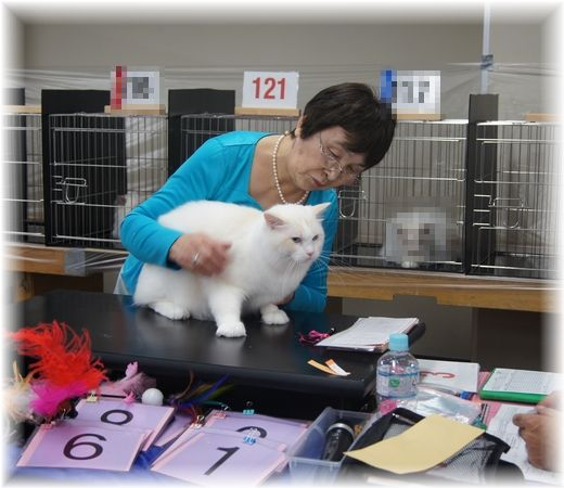 TICA&FOUR LEAF CLOVER CAT CLUB 1st CAT SHOW_c0080132_157339.jpg