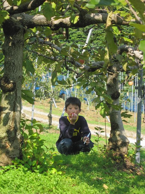 毎年行くりんご狩りにいってきましたが、_a0298652_1136381.jpg