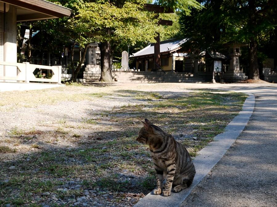 和歌山城公園にて_b0093754_22162643.jpg