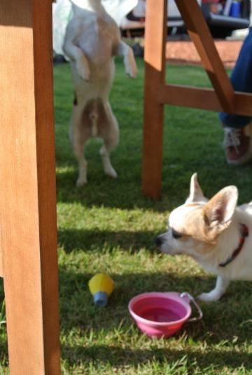 犬たちとBBQ_d0143957_22331656.jpg