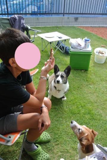 犬たちとBBQ_d0143957_22334419.jpg