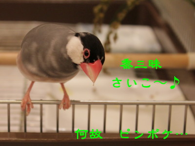 b0158061_21342350.jpg