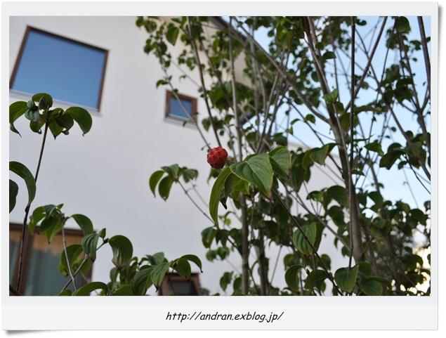 【メンテナンス】 玄関ポーチ木製ステップの再塗装_c0176271_23135951.jpg