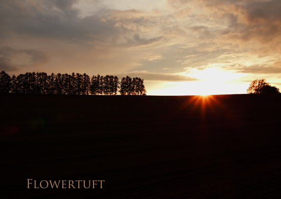 夕日を追いかけて―北海道美瑛②_c0137872_058256.jpg