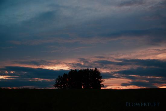 夕日を追いかけて―北海道美瑛②_c0137872_1112913.jpg