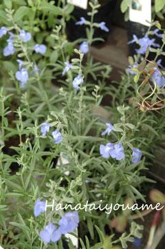 風に揺れる花たち_e0130779_18322682.jpg