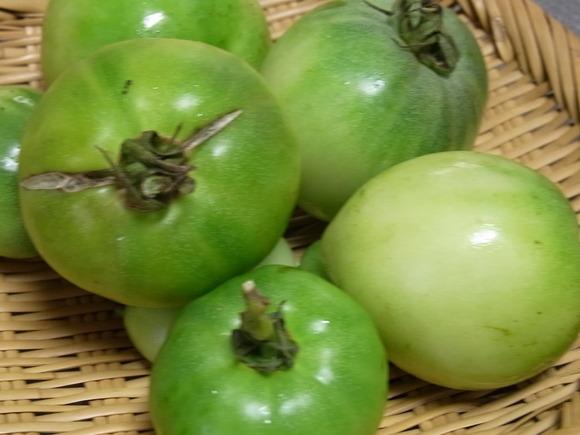 今年最後の庭のトマトで「緑のトマトのコンフィチュール」を作りました  記:藤本 洋子_a0195310_18203392.jpg
